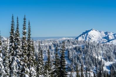 Paradise at Mt. Rainier
